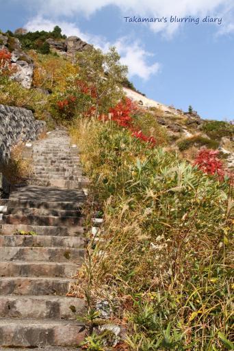 この階段、頂上まで続いているらしい