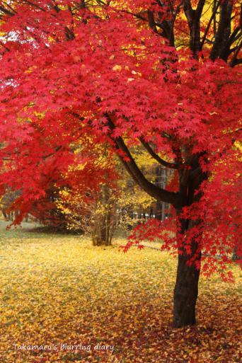 3日間の中で、ここの紅葉が一番赤かった