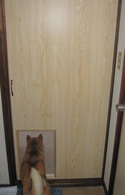 新しいドア1