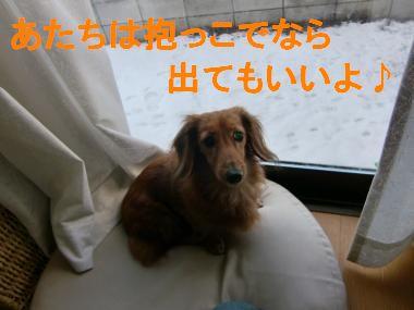 CIMG8956_convert_20100204215405.jpg