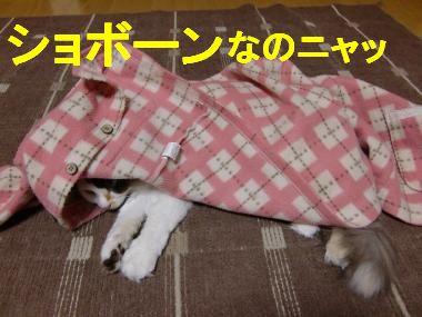 CIMG9448_convert_20100225205909.jpg