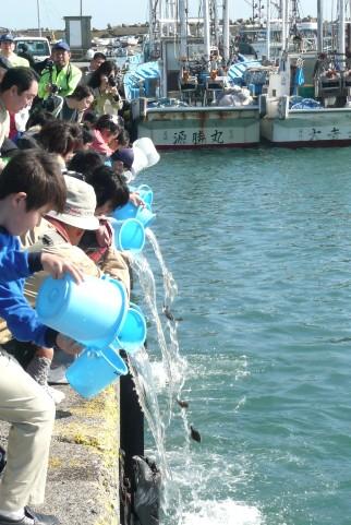 稚魚の放流