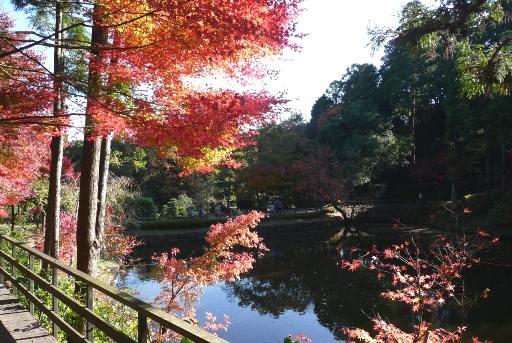 不老池の紅葉