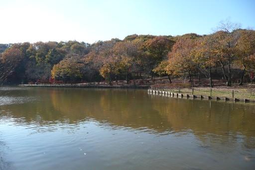 新池の紅葉