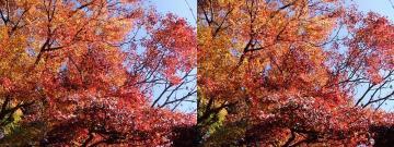上の写真と同じ場所の紅葉