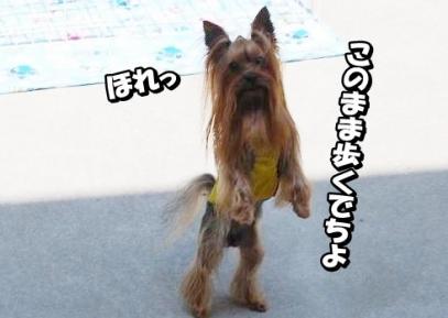 yuhi7.jpg