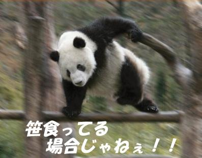 vlomoshiro008819.jpg