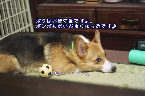 002_20100802213233.jpg