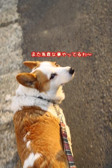 004_20100223203113.jpg
