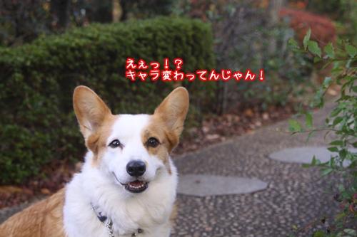 005_20091121192605.jpg