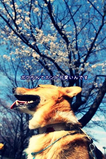005_20100328190455.jpg