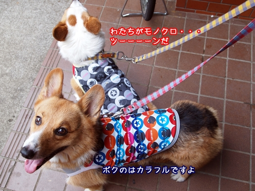 006_20100913003233.jpg