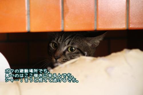 006_20101007130921.jpg