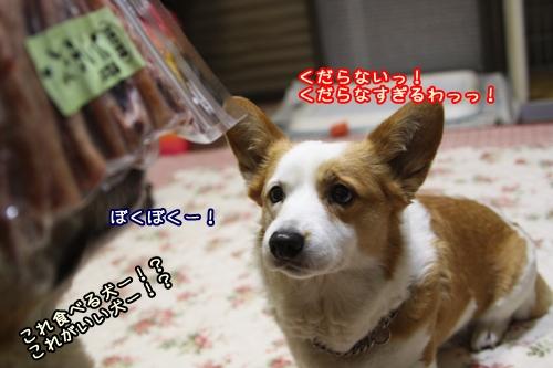 009_20100218204039.jpg