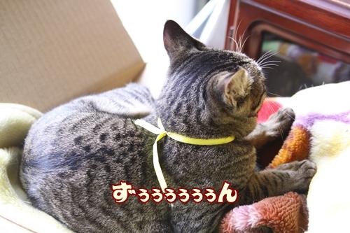 011_20100105120724.jpg