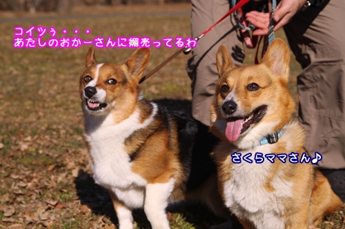 012_20100124185043.jpg