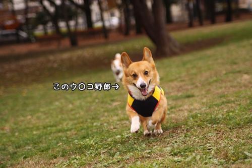 014_20091130193646.jpg