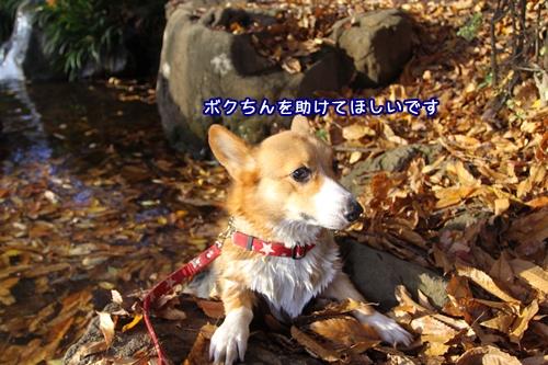 015_20091121192605.jpg