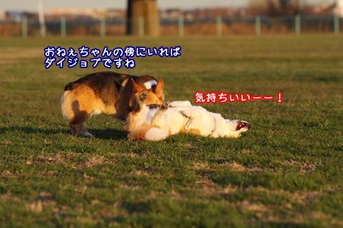 016_20091220104955.jpg