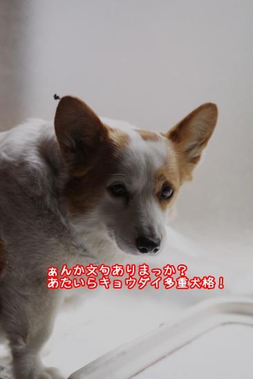 017_20100430200246.jpg