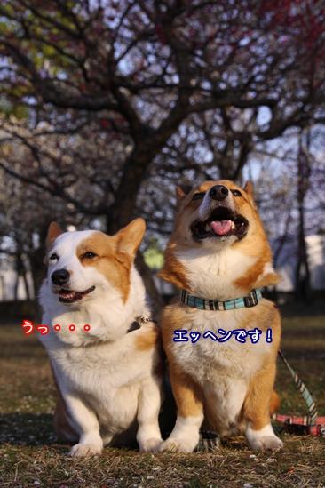 018_20100311183359.jpg