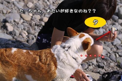 019_20100504173644.jpg