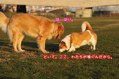 023_20091220103014.jpg