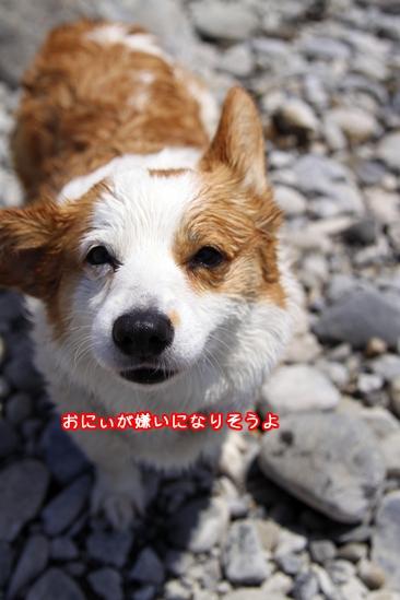 031_20100521184459.jpg