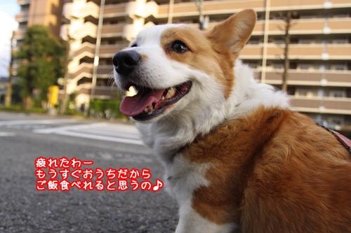 037_20100405154141.jpg