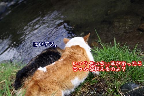 043_20100828103539.jpg