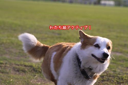 052_20100512185505.jpg