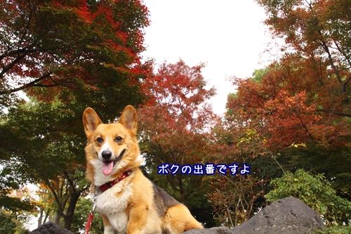 053_20091116202559.jpg