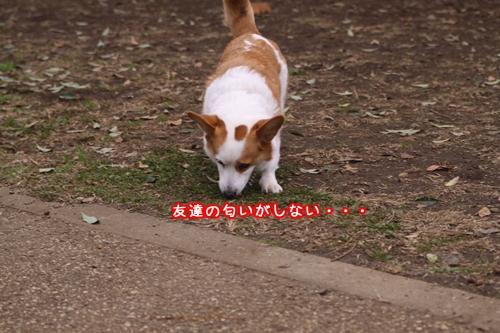 060_20091116202334.jpg