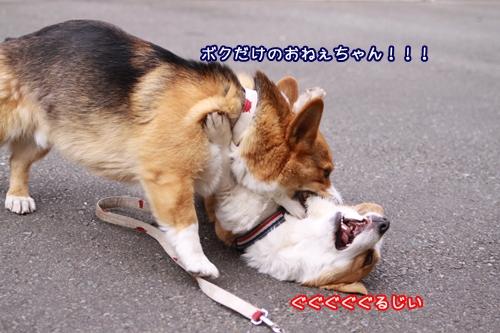 060_20100328190455.jpg