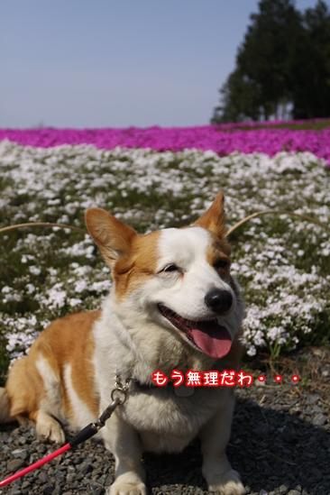 060_20100426194302.jpg
