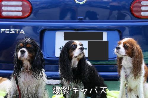 077_20100915214009.jpg