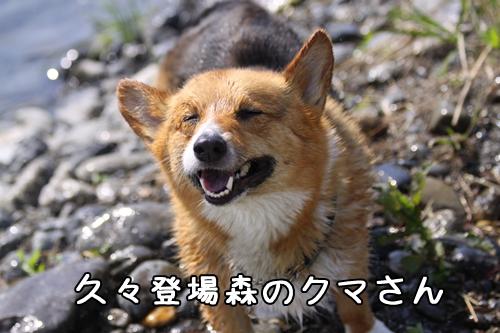 102_20100504173644.jpg