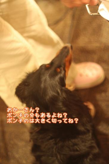 109_20100731094801.jpg
