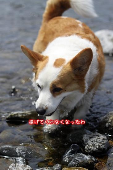 115_20100518191243.jpg