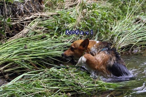 126_20100703210643.jpg
