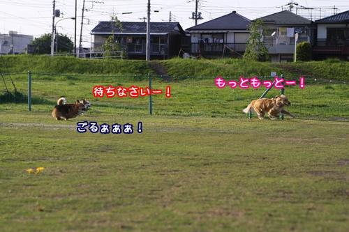 129_20100512185634.jpg