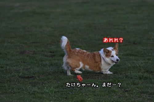 133_20091221145919.jpg