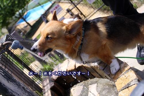 139_20100528194654.jpg