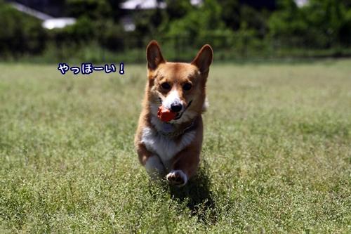149_20100528194654.jpg
