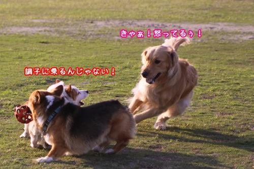 152_20100512185634.jpg