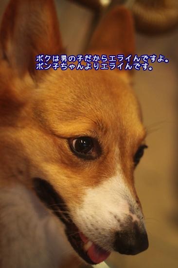 154_20100316115836.jpg