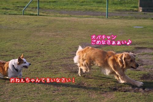 154_20100512185634.jpg