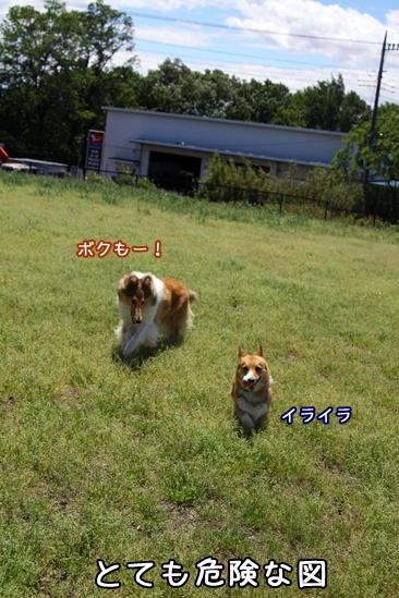 161_20100528194717.jpg
