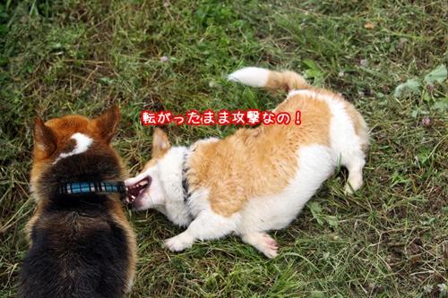 177_20100703204008.jpg