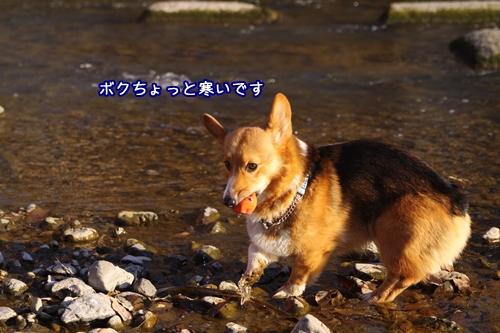 179_20100125111111.jpg